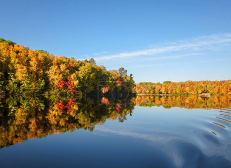 Photo for Autumn trees reflected in water. - Royalty Free Image