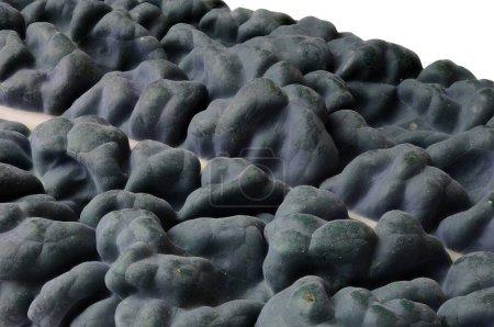 Photo pour Une macro d'une feuille de cavolo nero également connu sous le nom lacinato chou frisé - image libre de droit