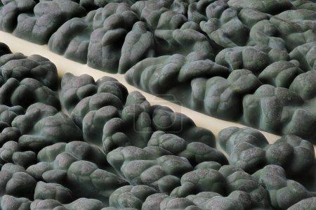 Photo pour Gros plan d'une feuille de chou frisé lacinato aussi connu sous le nom de cavolo nero - image libre de droit