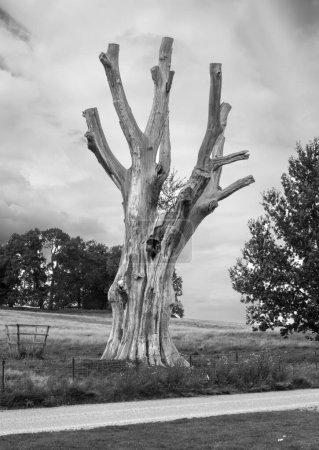 Photo pour Exemple d'arbre mort sans vie - image libre de droit