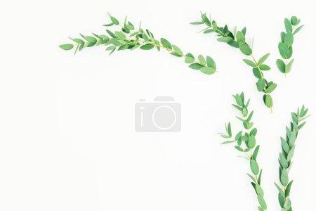 Photo pour Cadre floral de branches d'eucalyptus sur fond blanc. Couché plat, vue du dessus - image libre de droit