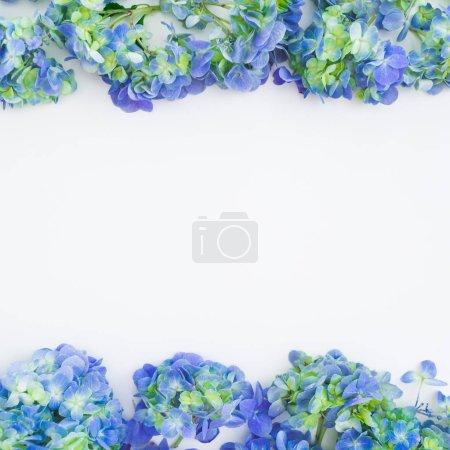 Photo pour Structure florale avec des fleurs d'Hortensia bleu sur fond blanc. Vue plate Lapointe, haut. Floral fond - image libre de droit