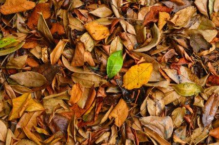 Ein Blatt ist das wichtigste seitliche Anhängsel des Gefäßpflanzenstammes, das normalerweise oberirdisch getragen wird und auf Photosynthese spezialisiert ist. Blätter und Stiel bilden zusammen den Trieb. Blätter werden kollektiv als Laub bezeichnet. Blätter sind am imponierendsten