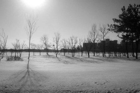 Photo pour Paysage hivernal avec arbres et neige, blanc noir - image libre de droit