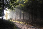 Jesus Christ walking after His resurrection. Figure in sun lights. Sunning shine in forest.