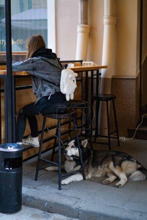 Photo pour Husky avec la maîtresse dans un café. - image libre de droit