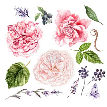 Roses, lavender and leaves, watercolor, can be used for greeting card, invitation card for wedding, birthday and other holiday and summer background.