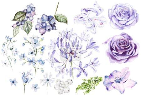 Photo pour Aquarelle Set avec des roses violettes et violettes et des fleurs, des bleuets et des baies. Illustration - image libre de droit