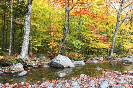 Photo pour Landscape of autumn forest and stream - image libre de droit