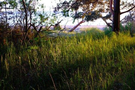 lever de soleil spectaculaire sur les arbres tranquilles de campagne dans la forêt. latvia