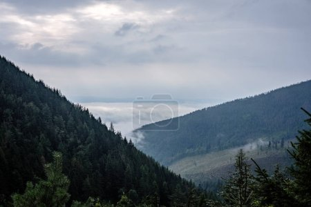 panoramic view of misty forest in western carpathian mountains. Tatra in foggy sunset, far horizon. Slovakia in early autumn