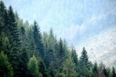 "Постер, картина, фотообои ""panoramic view of misty forest in western carpathian mountains. """