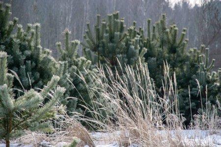 Photo pour Végétation gelée en hiver sur fond flou texture fron feuilles et branches froides. abstrait - image libre de droit