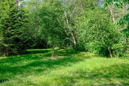 Foto de Vista pintoresca de bosque verde a pleno sol de verano - Imagen libre de derechos
