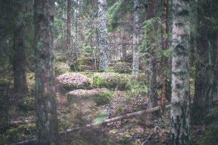 autumn forest after the rain with wet foliage and shallow depth of field. dull green colors - vintage retro look