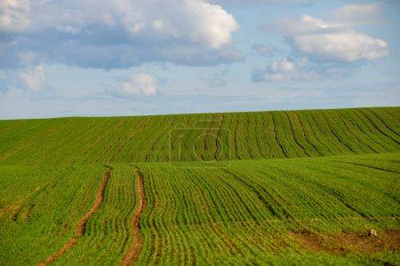Grün bewirtschaftete Felder im Grünen
