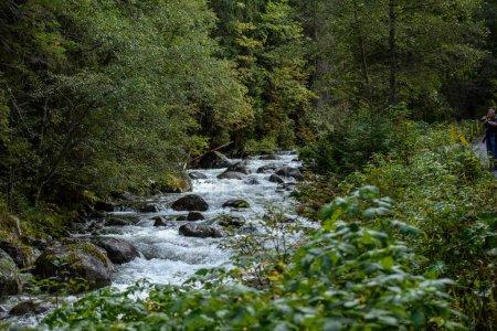Photo pour Rivière rocheuse de montagne rapide en forêt avec cascade en automne - image libre de droit