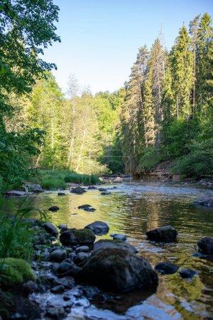 Photo pour Lever de soleil sur la rivière de la forêt dans les bois, la lumière précoce sur la rivière Amata en Lettonie. ruisseau avec des roches et des feuilles vertes en été - image libre de droit