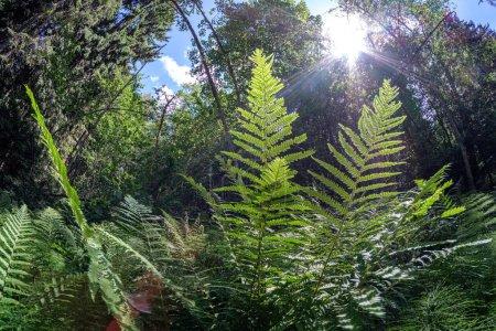 Photo pour Feuillage feuille texture herbe en vert ensoleillé heure d'été. fond nature remplir - image libre de droit