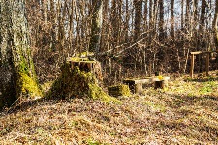 Photo pour Vieux tronc d'arbre sec piétiner dans la nature, scène forestière avec feuillage et bois rond - image libre de droit