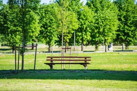 summer sun lit green forest park for relaxsation
