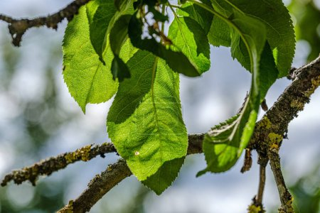 Photo pour Feuilles vertes sur fond flou. végétation feuillage texture abstraite - image libre de droit