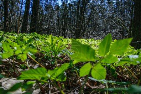 Photo pour Textures de feuillage d'herbe verte dans la nature. environnement naturel printanier frais - image libre de droit