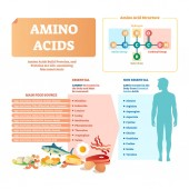 Amino acids vector illustration List with food and essential acids
