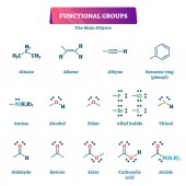 Functional groups vector illustration Chemical reactions explanation list