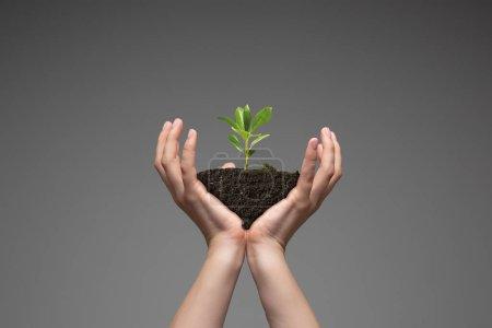 Photo pour Les mains humaines tenant une plante verte fraîche, symbole de la croissance des affaires, de la conservation de l'environnement et de l'épargne bancaire. Planète entre vos mains. Problèmes écologiques de l'humanité, vie verte, nouveaux départs. - image libre de droit