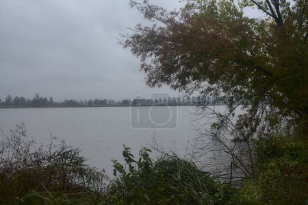 Photo for A river framed by trees in autumn during a light rainfall - Royalty Free Image