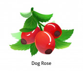 Dog rose berries with leaf on white background
