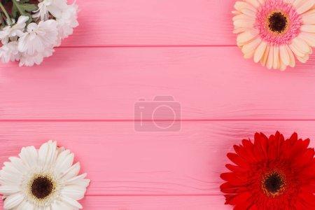 Photo pour Fleurs de marguerite de camomille et gerbera sur bois. Fleurs disposées selon les angles, l'espace de copyspace, vue de dessus. Fond de table en bois rose . - image libre de droit
