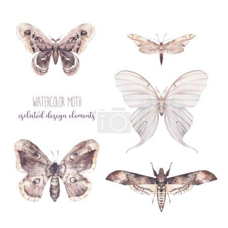 Photo pour Ensemble papillon aquarelle. Collection d'insectes dessinés à la main isolés sur fond blanc. Illustrations naturelles - image libre de droit