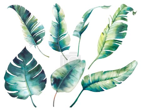 Photo for Watercolor tropical leaves: monstera, rubber plant, banana palm. Botanical illustration of exotic flora. Isolated objects on white background - Royalty Free Image