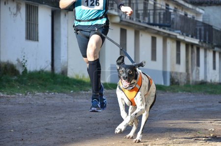Photo for Dog and its owner taking part in a popular canicross race - Royalty Free Image