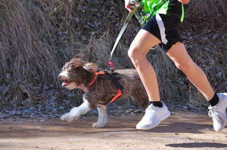 Photo for Dog and a boy taking part in a popular canicross race for children - Royalty Free Image