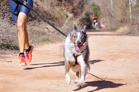Photo for Dog and man taking part in a popular canicross race - Royalty Free Image
