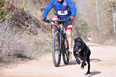 Photo for A dog and its musher taking part in a popular canicross with bicycle (bikejoring) - Royalty Free Image
