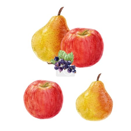 Photo for Beautiful composition with hand drawn watercolor fruits apple pear berries - Royalty Free Image