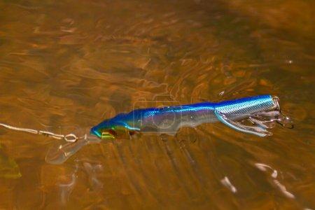 Photo pour Bleu vacillant plonge dans l'eau après éclaboussure pendant la pêche de spin - image libre de droit