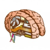 Innovation Computer Chip Brain Color Vector