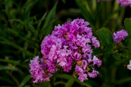 Photo for Close-up Thai Flower in the park. - Royalty Free Image