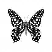 Hand drawn Tailed Jay Butterfly - Graphium agamemnon