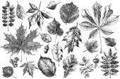 Hand drawn autumn leaves set