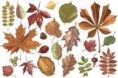 Hand drawn colorful autumn leaves set