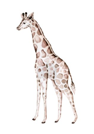 Photo pour Aquarelle dessinée à la main décoration de girafe tropicale. Illustrations de savanes exotiques, arbre jungle zoo, art branché brésilien. Parfait pour la conception de tissu - image libre de droit