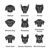 Dogs breeds glyph icons set Maltese Doberman pit bull Bernese Dog Sheepdog Shorthaired Pointer Great Dane German Shepherd Mini Schnauzer Silhouette symbols Vector isolated illustratio