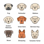 Dogs breeds color icons set Pug Rottweiler Maltese Golden Retriever Great Dane Bernese Mountain Dog Shetland Sheepdog boxer Yorkshire Terrier Isolated vector illustrations