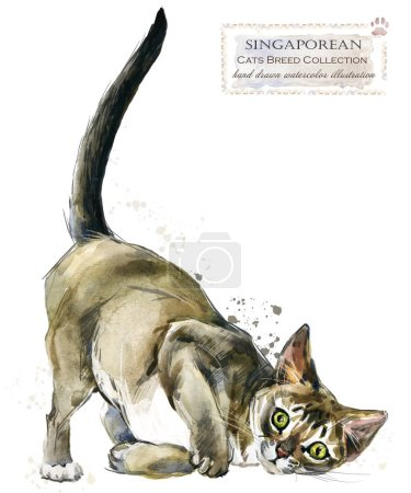 Photo for Cat. watercolor home pet illustration. Cats breeds series. domestic animal. - Royalty Free Image